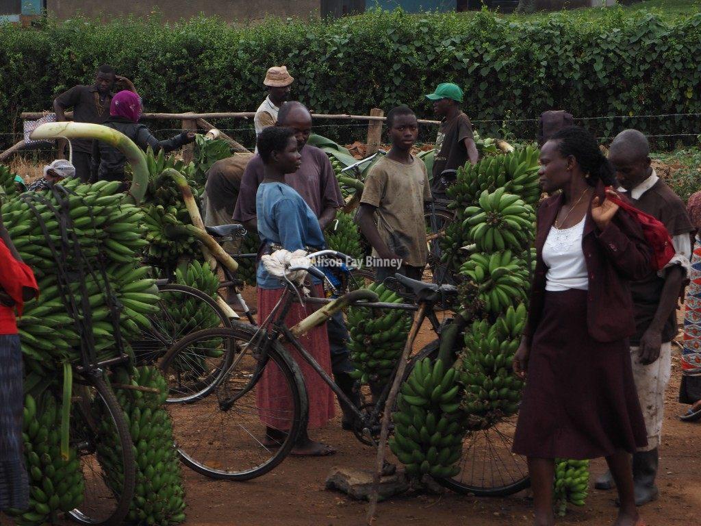 Ugandan farmers cycle their bananas to local markets.