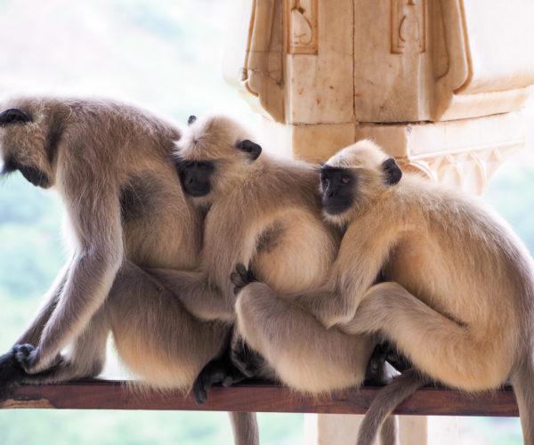 Family nap time at the Amber Palace, Jaipur